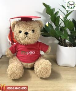 Gấu tốt nghiệp quà tặng